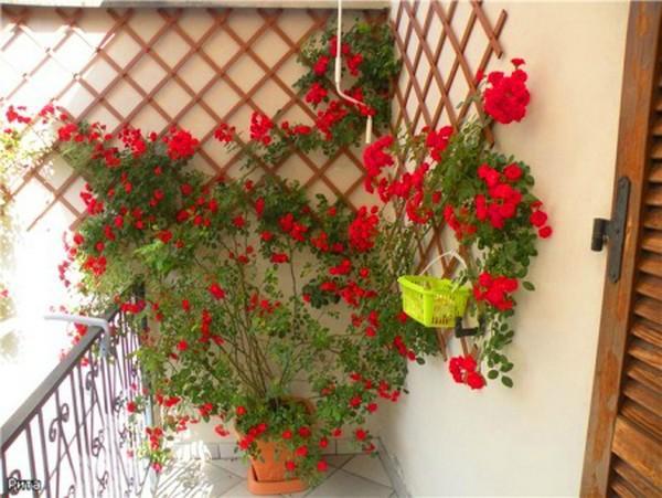 Сад на балконе своими руками 629