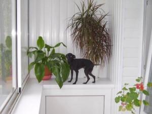 Собака не балконе