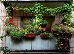 Цветы в вазонах