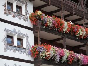 Цветы спадают с балкона