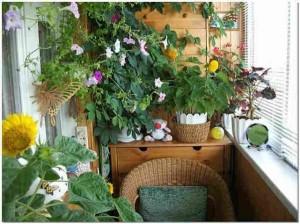Неухоженные растения в вазонах