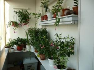 Декор балкона - растения