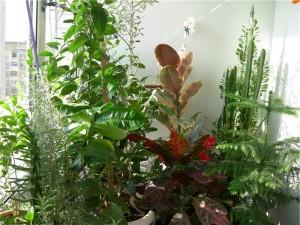 Как обустроить зимний сад